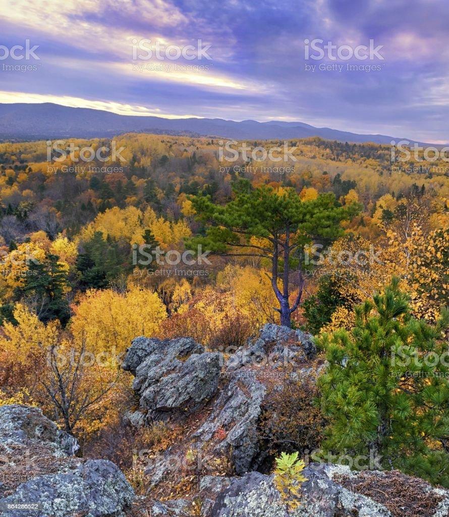 Autumn bonsai on the Khekhtsir slopes. Far East, Russia. royalty-free stock photo