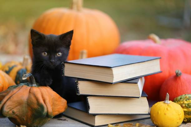 Autumn books for Halloween concept.Stack of books with black covers, black cat and pumpkins set on garden background. Scary autumn reading Autumn books for Halloween concept.Stack of books with black covers, black cat and pumpkins set on garden background. Scary autumn reading black cat stock pictures, royalty-free photos & images