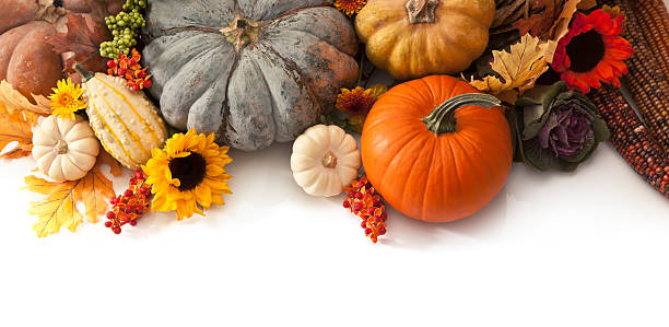 autumn border - gourd stock photos and pictures