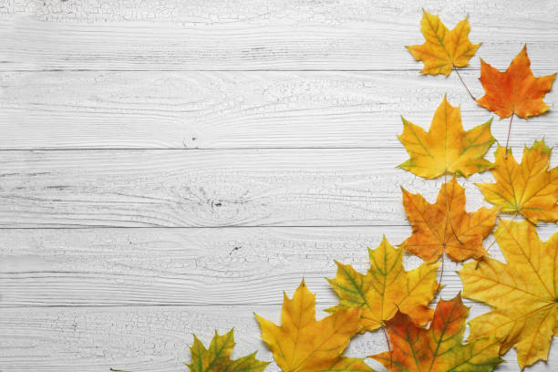 Autumn border with leaves on white wood background. stock photo