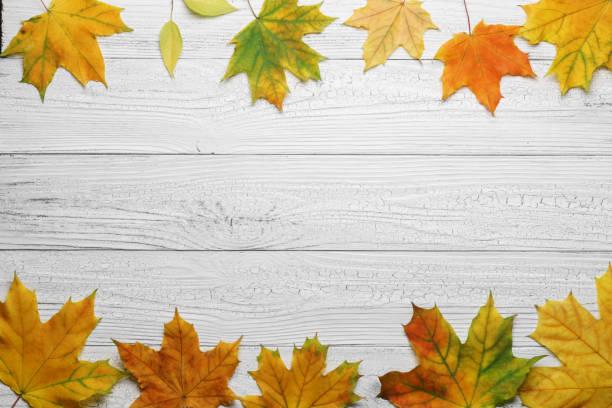 HerbstGrenze mit Blättern auf weißem Holzhintergrund. – Foto