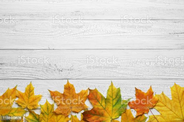Photo of Autumn border with leaves on white wood background.