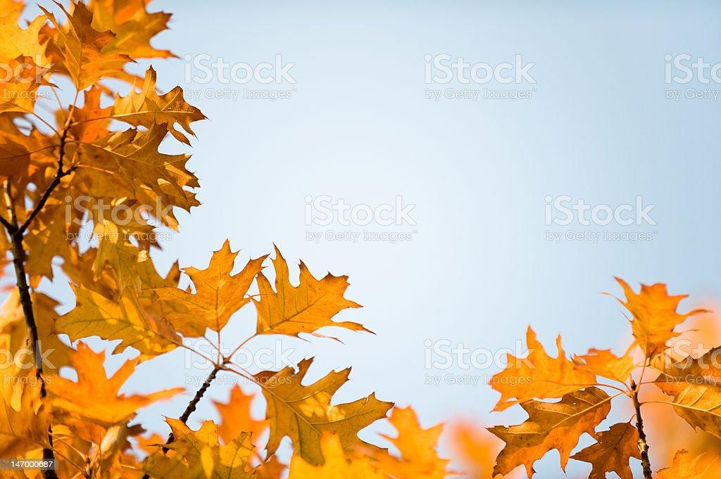 Herbst branch Hintergrund – Foto