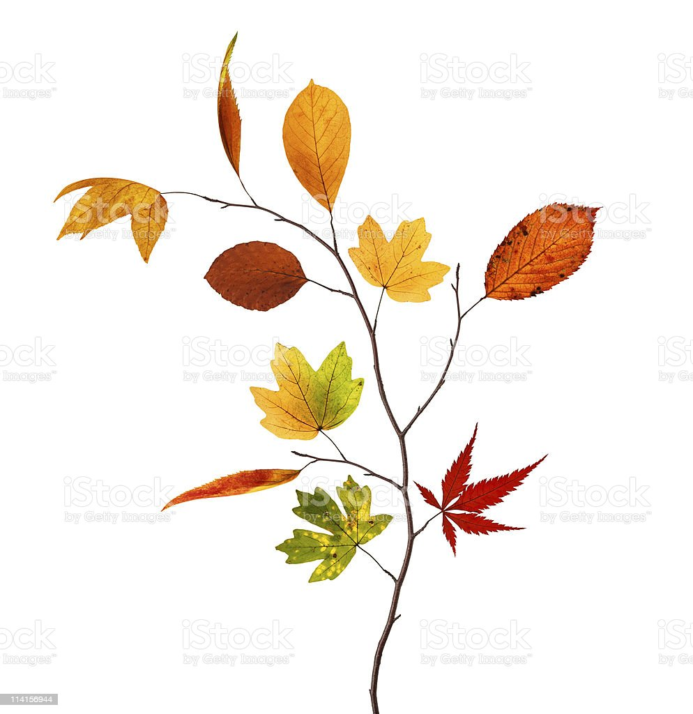 Autumn Branch royalty-free stock photo
