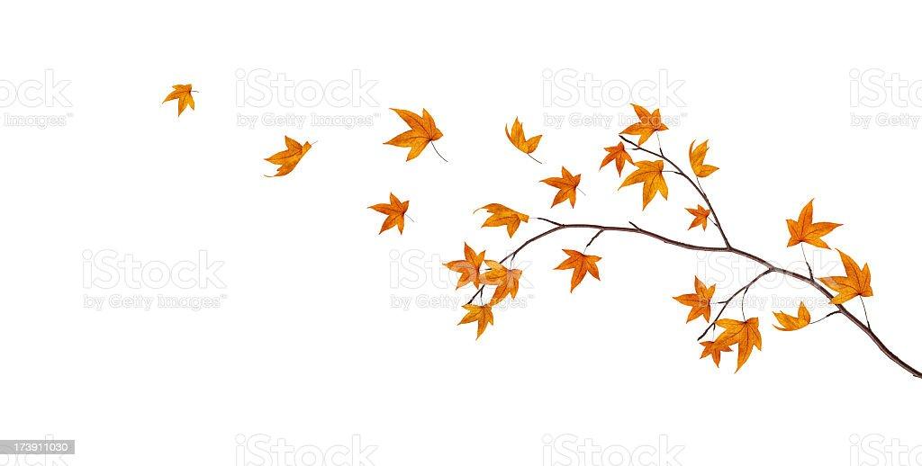 Branche d'automne - Photo