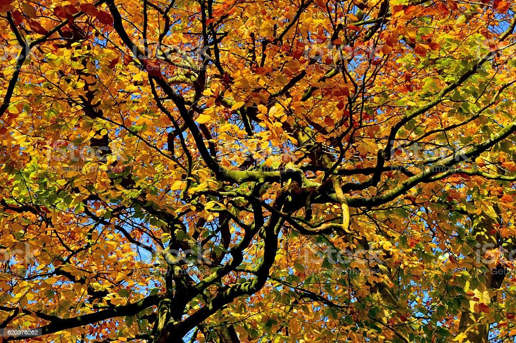 Autumn Branches and Leaves foto de stock royalty-free