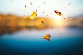 Colorful autumn background with falling leaves by the lake.