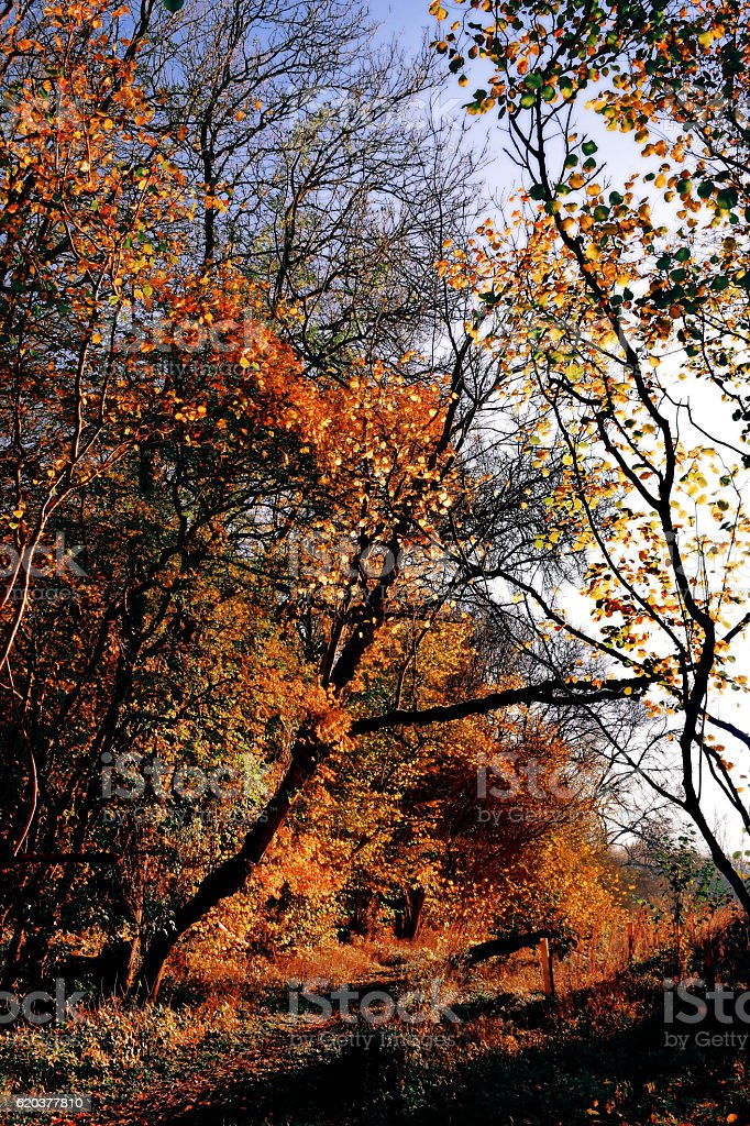 Autumn by the Wood foto de stock royalty-free