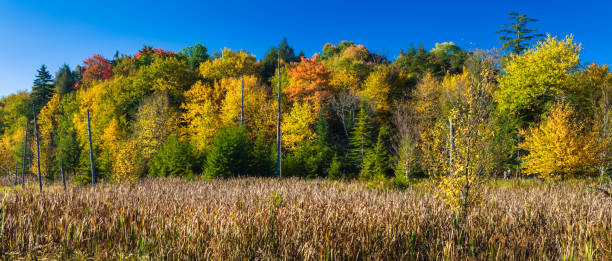 Autumn, Canaan Valley State Park, West Virginia stock photo