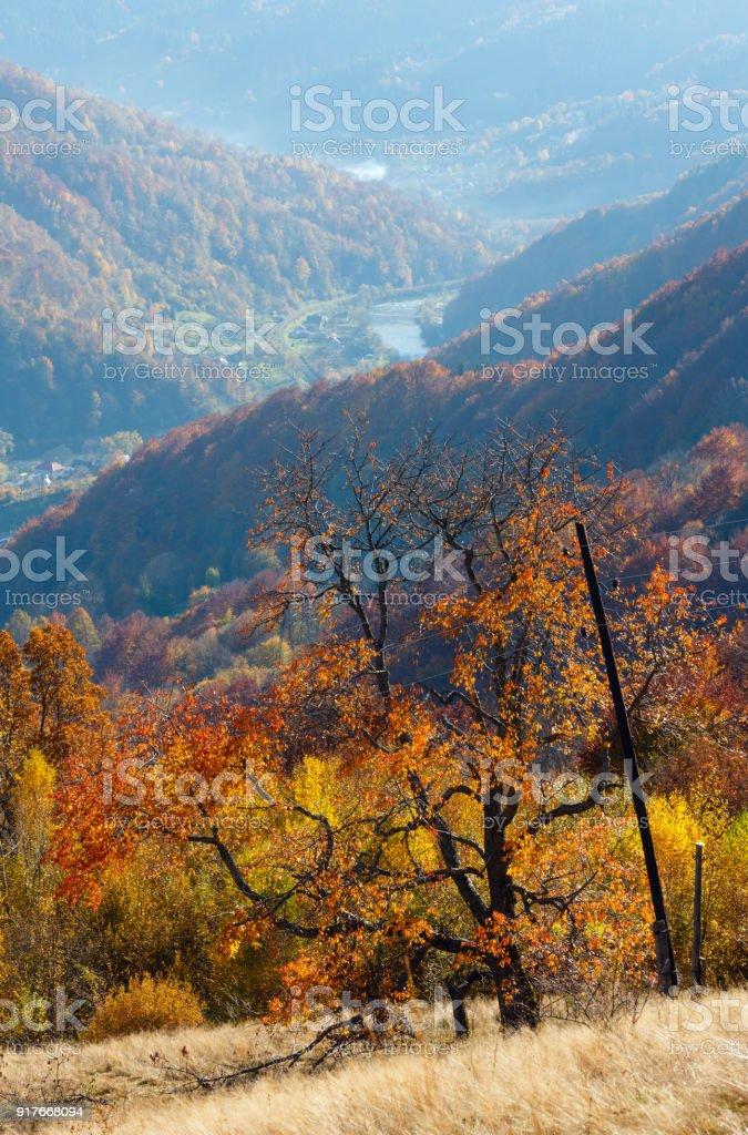 秋カルパティア山、ラホフ、ウクライナ ロイヤリティフリーストックフォト