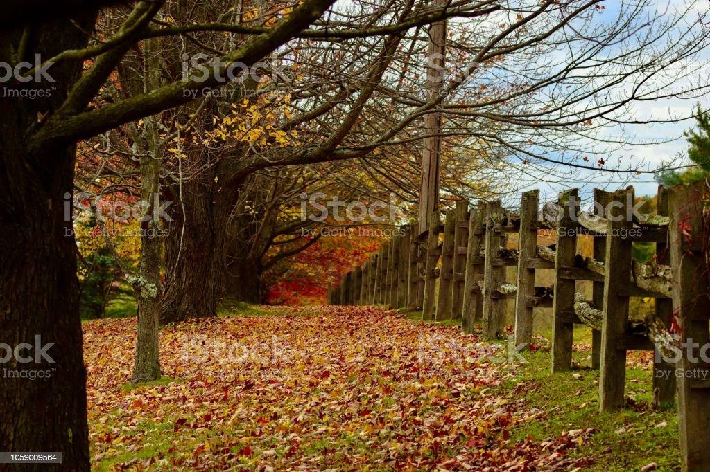 Autumn carpet leaves stock photo