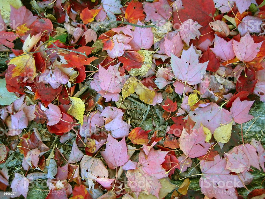 Autumn carpet royalty-free stock photo