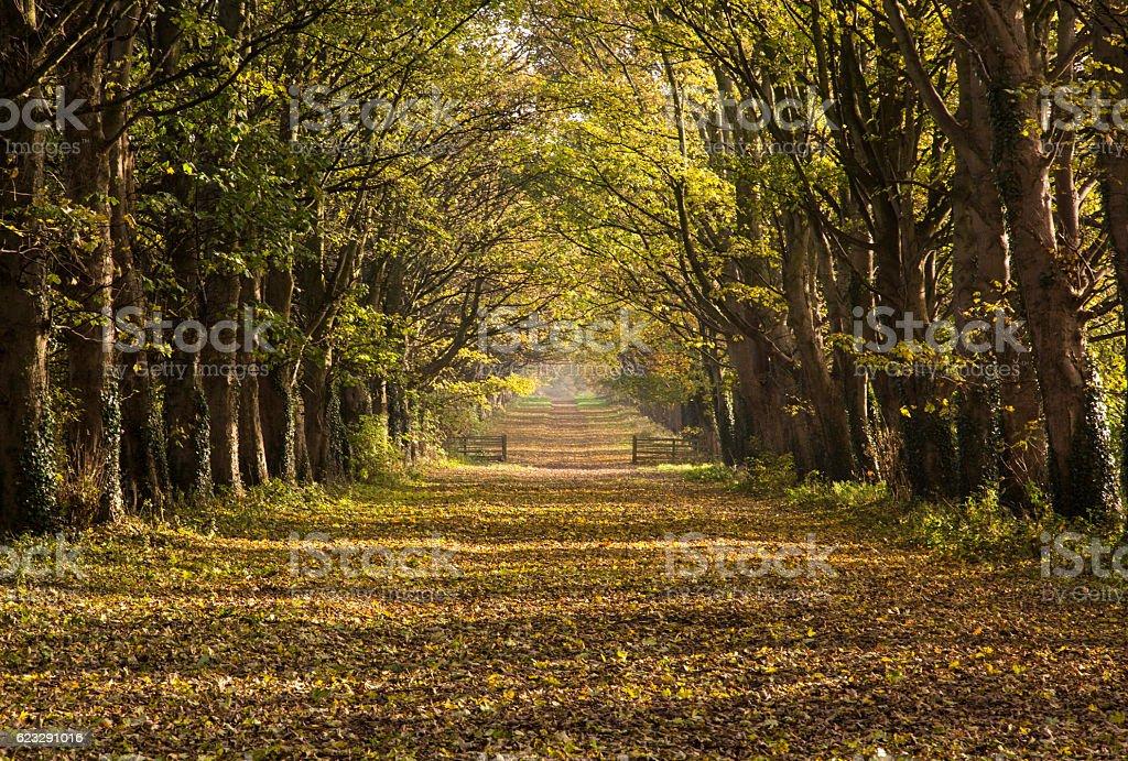 Autumn Causeway royalty-free stock photo