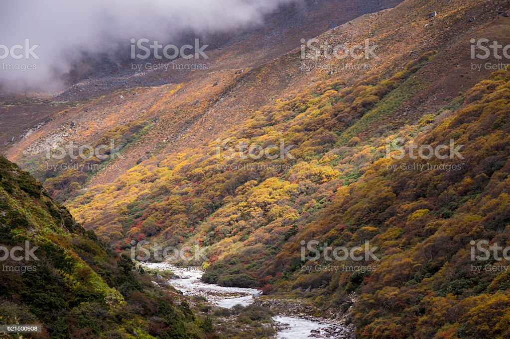 autumn changing color forest in Sagarmatha National Park,Nepal foto stock royalty-free
