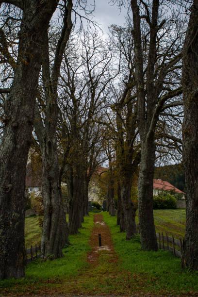 Herbst Kastanien Allee – Foto