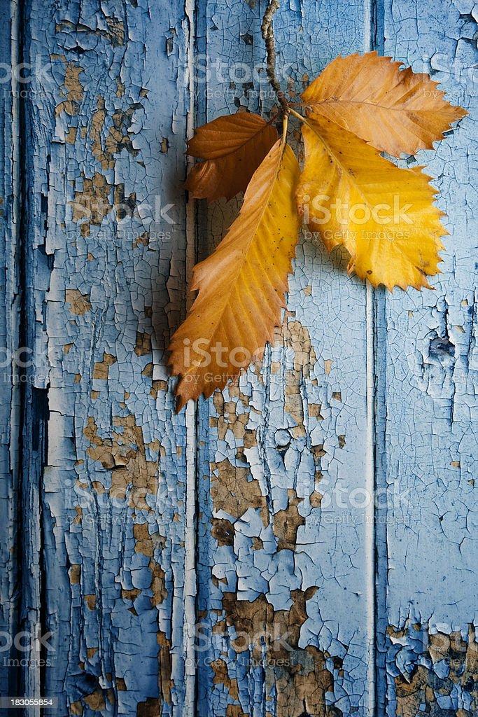 Autumn chestnut leaves against peeling paint royalty-free stock photo