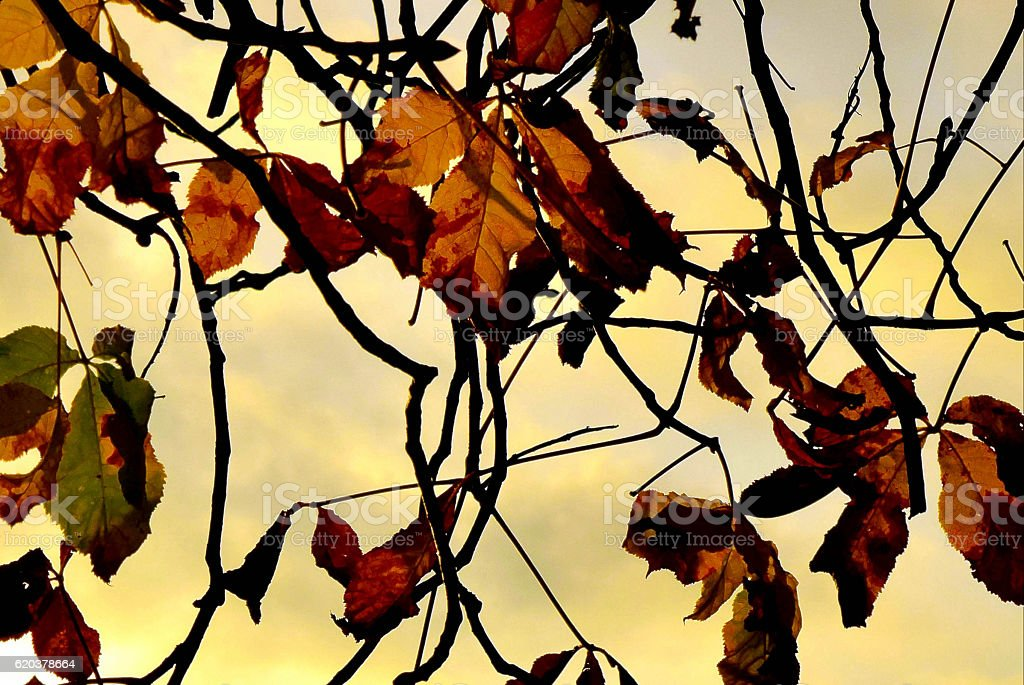 Castanha outono folhas foto de stock royalty-free