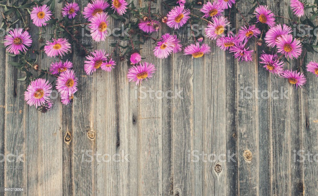 Autumn Chrysanthemum On Rustic Wooden Background Retro Styled Floral Royalty Free Stock