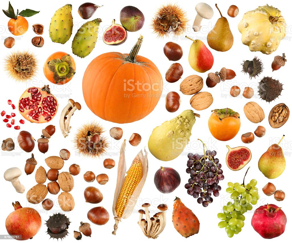 Autumn collection royalty-free stock photo