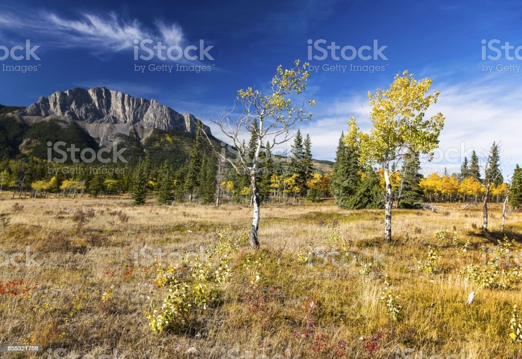 Autumn Color Change in Alberta Foothills stock photo