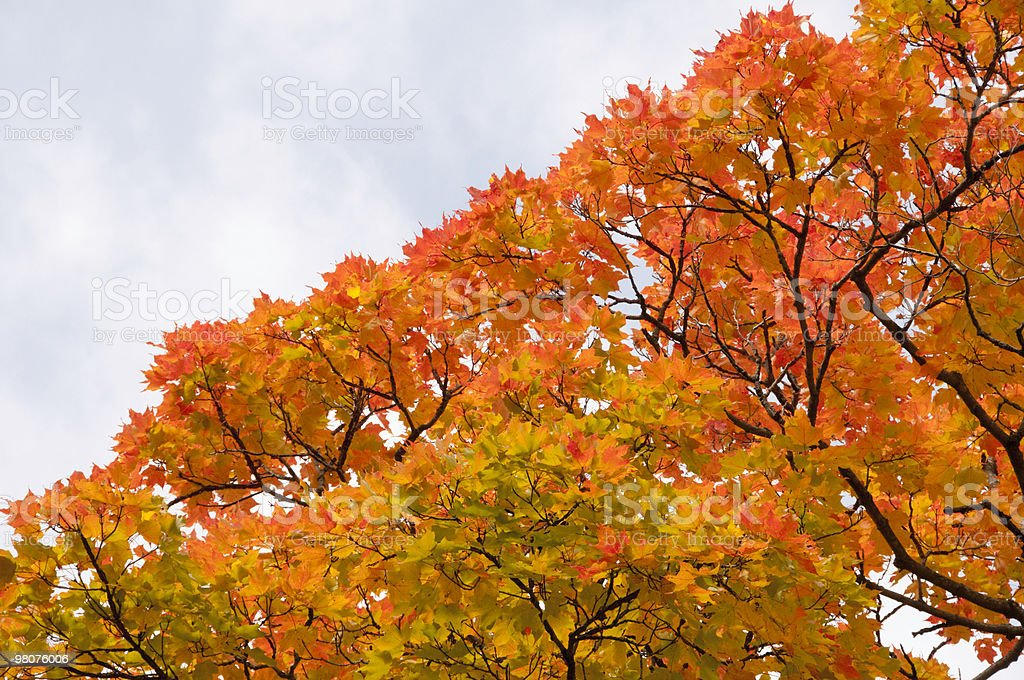 Autumn color in northern Illinois royalty-free stock photo