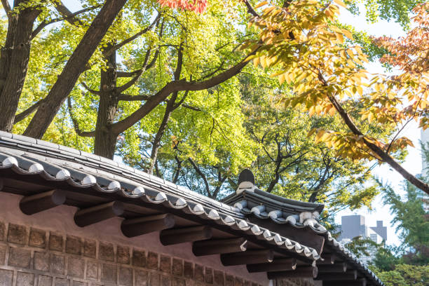 Autumn color in the leaves by old wall in Seoul stock photo