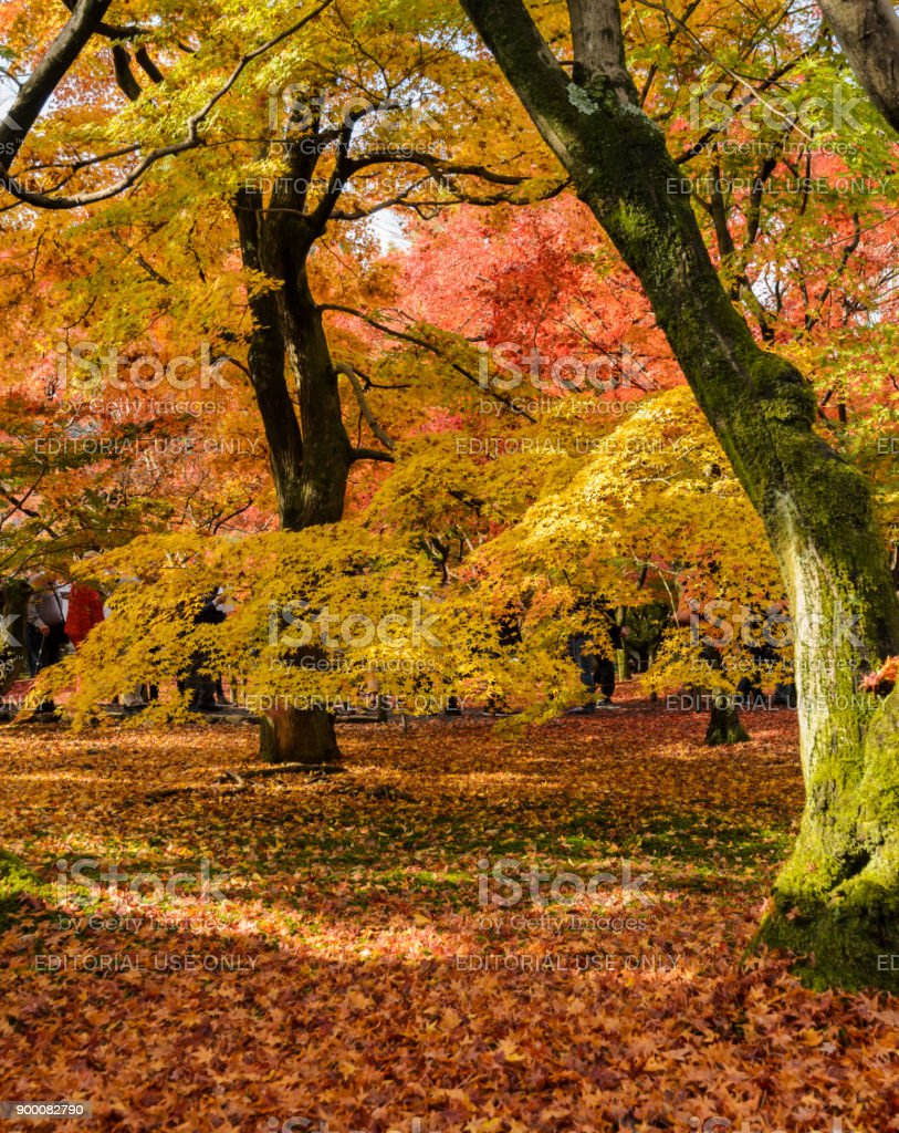 Autumn color leaves at Tofukuji temple in Kyoto, Japan stock photo