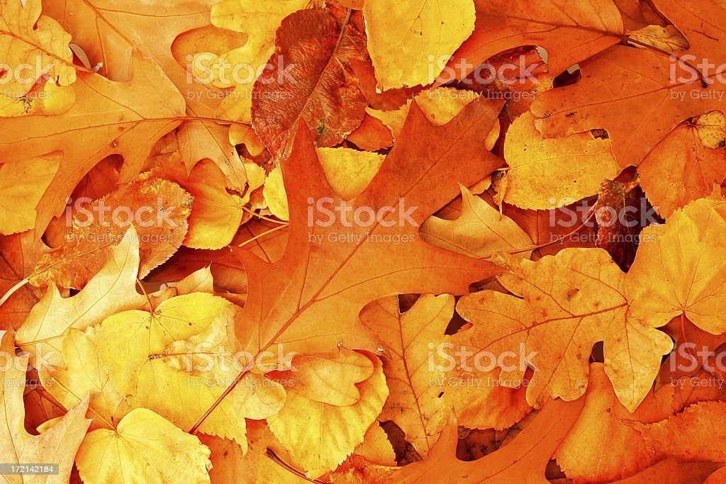Autumn color leaves royalty-free stock photo