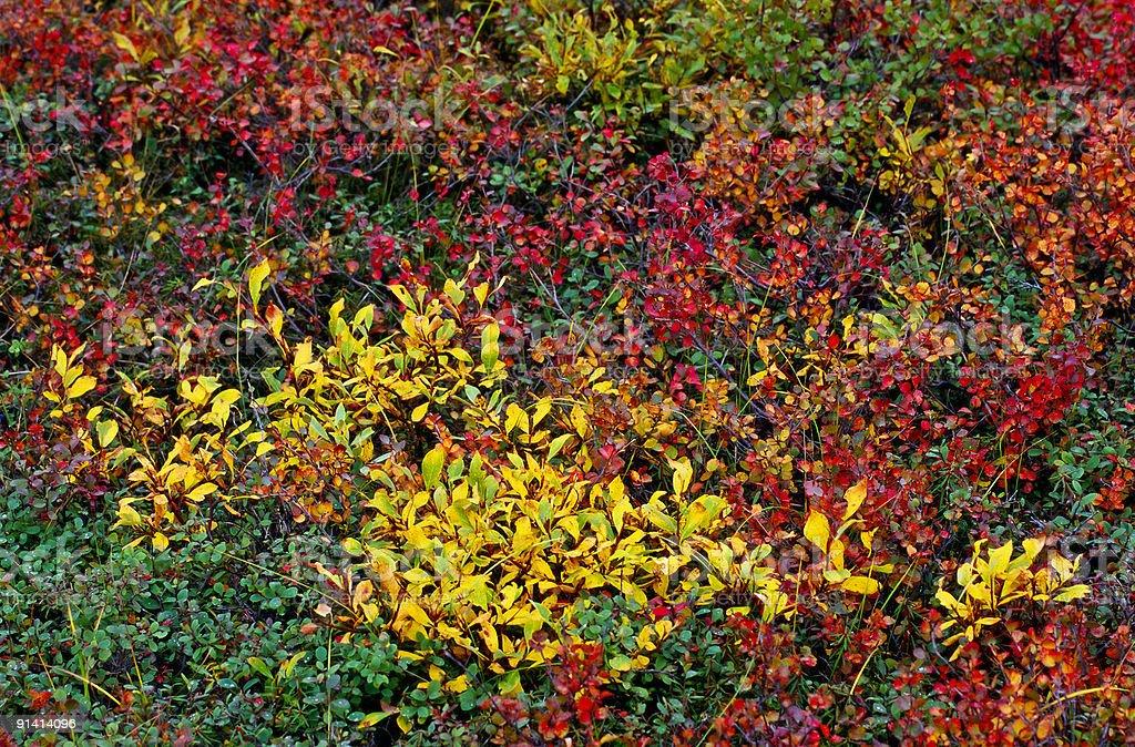 Autumn color pallete royalty-free stock photo