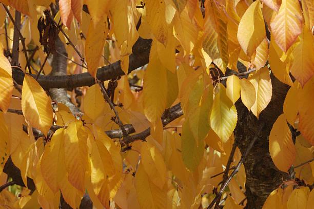 Autumn color stock photo