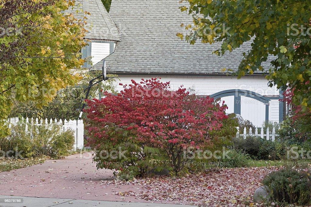 Autunno di colore foto stock royalty-free