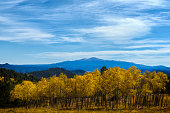 Aspens changing in Colorado with Spinney reservoir Mt Princton and Mt Harvard in the distence