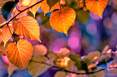 Beauty in nature. Colored leaves