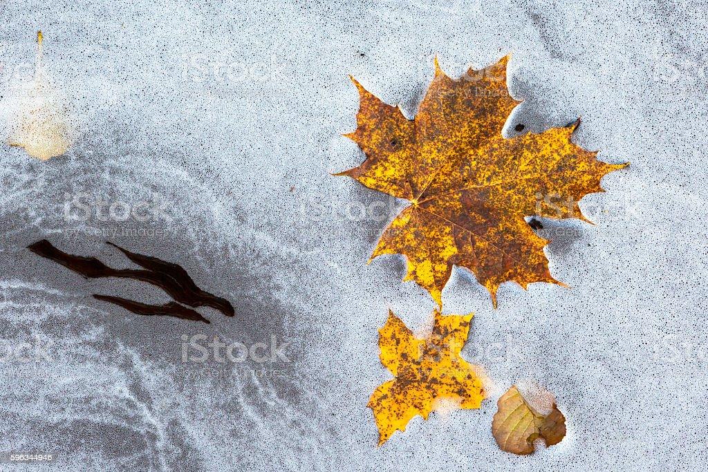 Autumn colored maple leaves floating in water foam Lizenzfreies stock-foto