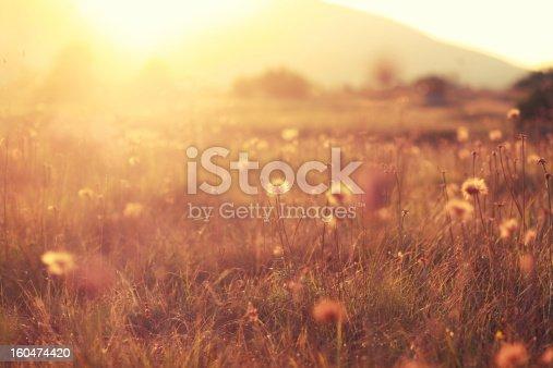 istock Autumn colored nature 160474420