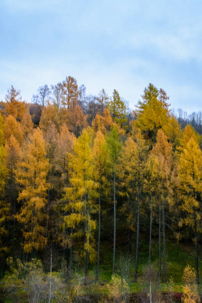 Farbigen Bäume Herbst – Foto