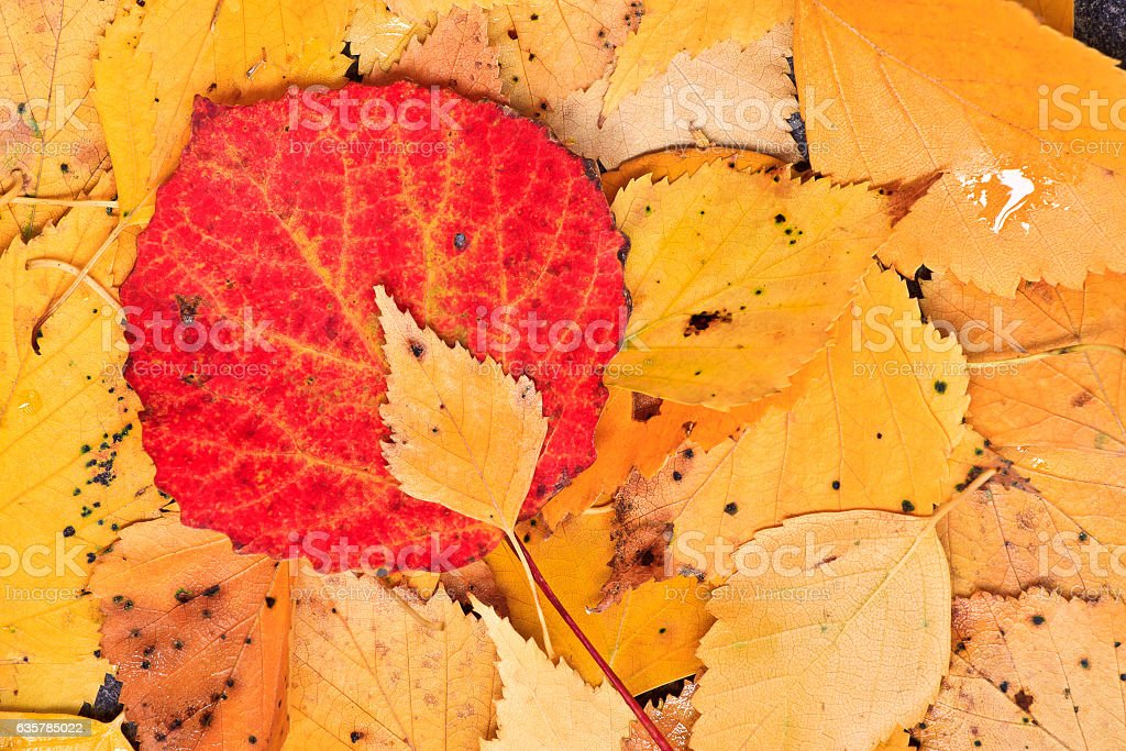 Autumn colorful foliage. Artistic arrangement. stock photo
