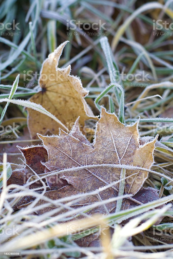 Autumn colorful leaves royalty-free stock photo