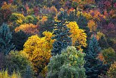 Fall mountain forest, autumn colorful trees texture background.