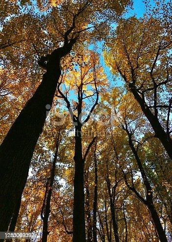 Trees turning colors in autumn