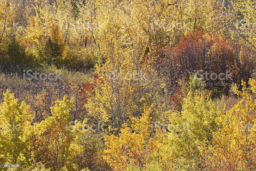 Autumn Colors Along Riverbank in Downtown Saskatoon royalty-free stock photo