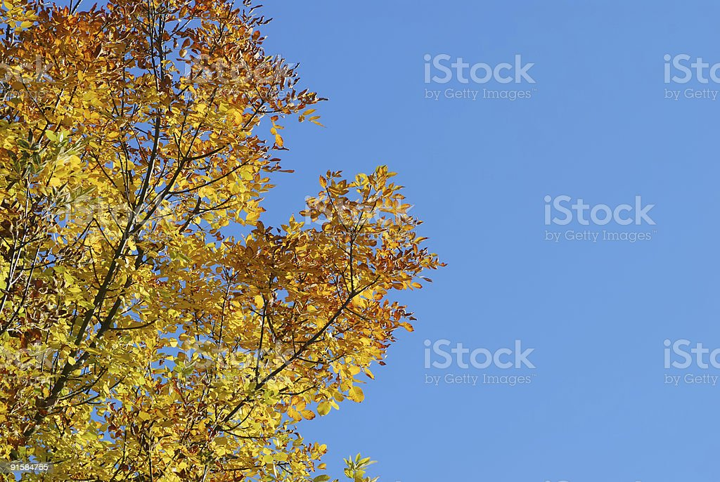 Autumn Colors and Blue Sky royalty-free stock photo