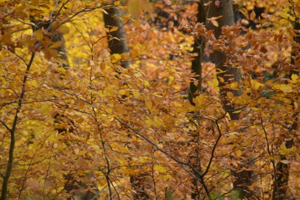 höstens färger och texturer av skogen - bernkastel kues höst bildbanksfoton och bilder