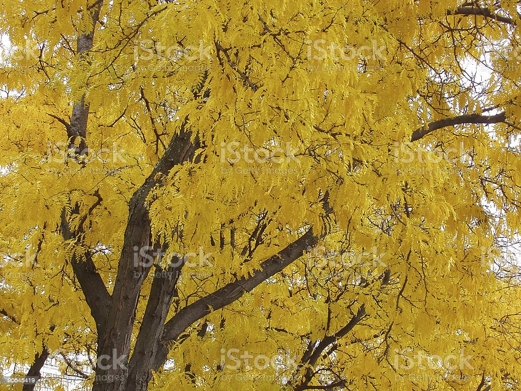 Autumn Colors Fall Tree Yellow stock photo