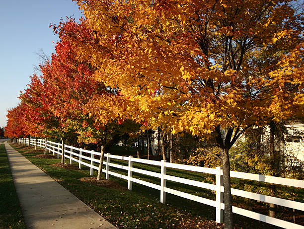 Autumn colors fence and sidewalk stock photo