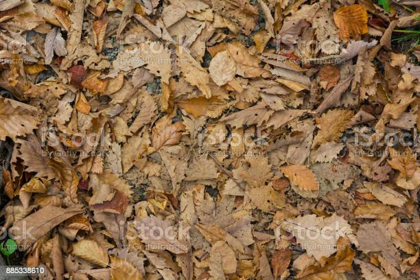 Photo of Autumn colors golden leaves