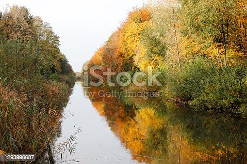 istock Autumn Colors – Hulkesteinse Bos (Netherlands) 1293996687