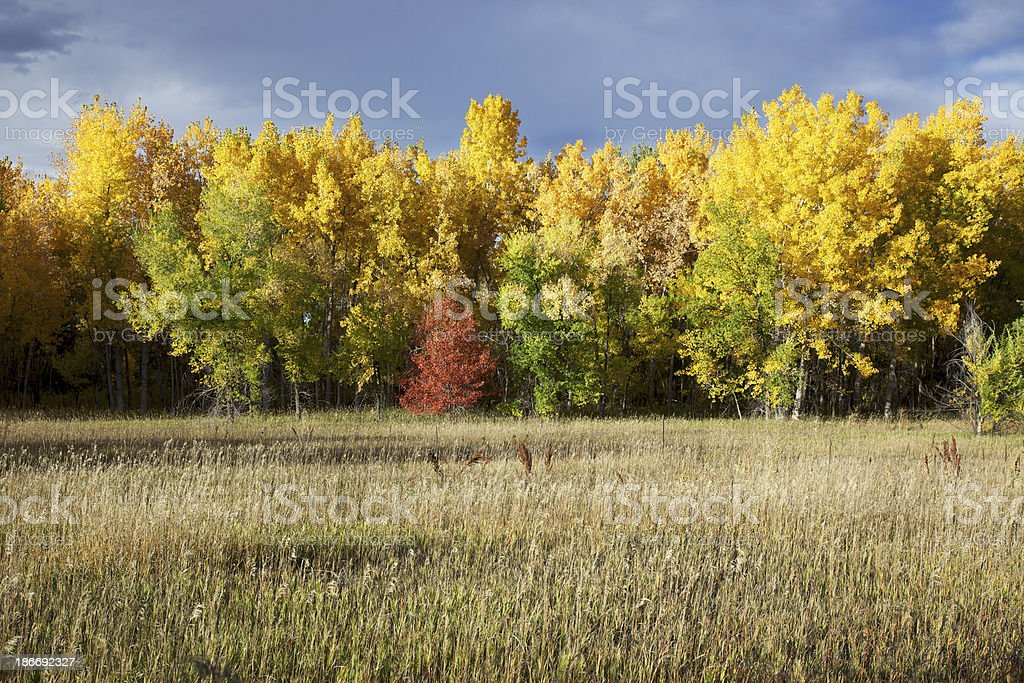 Autumn Colors in a Forest stock photo