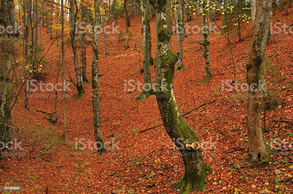 autumn colors in a wood royalty-free stock photo