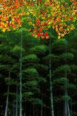 istock Autumn Colors in Arashimaya, Japan 1282791477